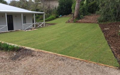 Kikuyu Grass Adelaide