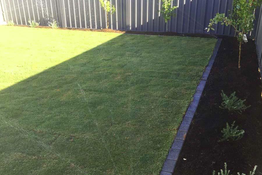 Kikuyu Grass Adelaide - front yard