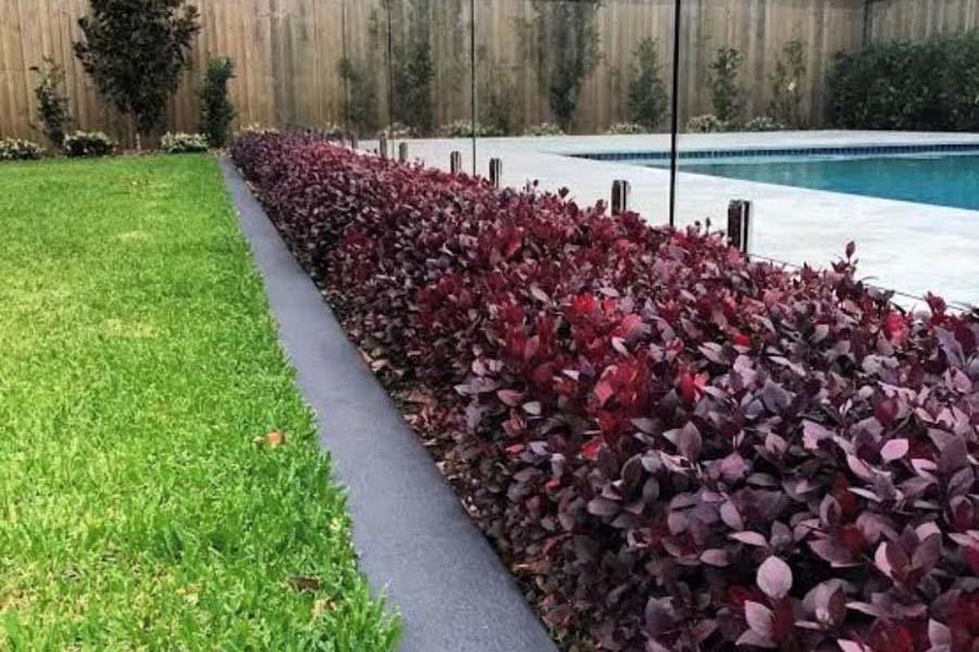 Adelaide Landscaper - front yard